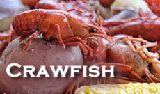 Louisiana crawfish