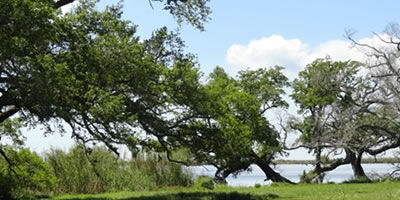 Pecan Island Louisiana Travel And Tourism Information Location Map History Forked Island And