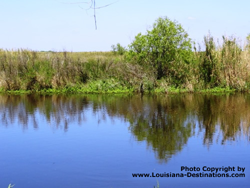 Canal with marsh grass at Pecan Island, Louisiana