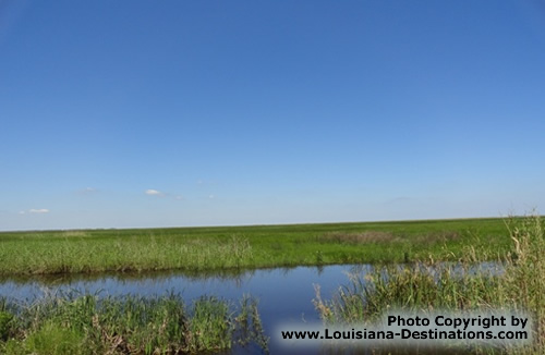 Marsh scene at Pecan Island, Louisiana