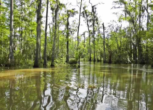 Scene in the Honey Island swamp in Louisiana